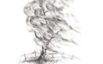 """Da """"La terra alta"""" a  """"Le quattro parole"""" l'ultimo lavoro Haiku di Daniele Brancati"""